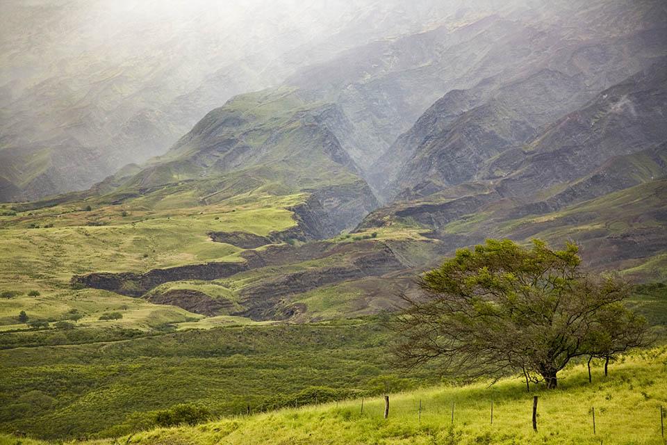 Pilani Paradise