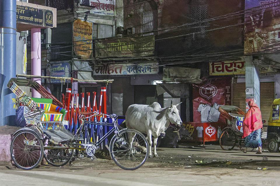 Indian Still Life