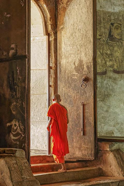 Bodhi Light