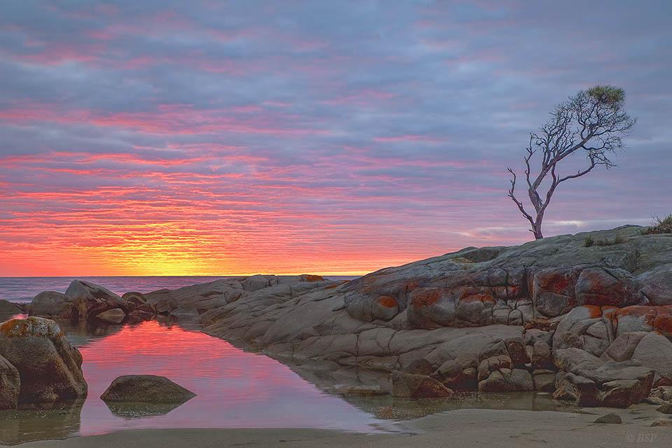 Tasmanian Revel
